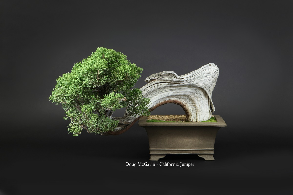 Bonsai: The Living Art