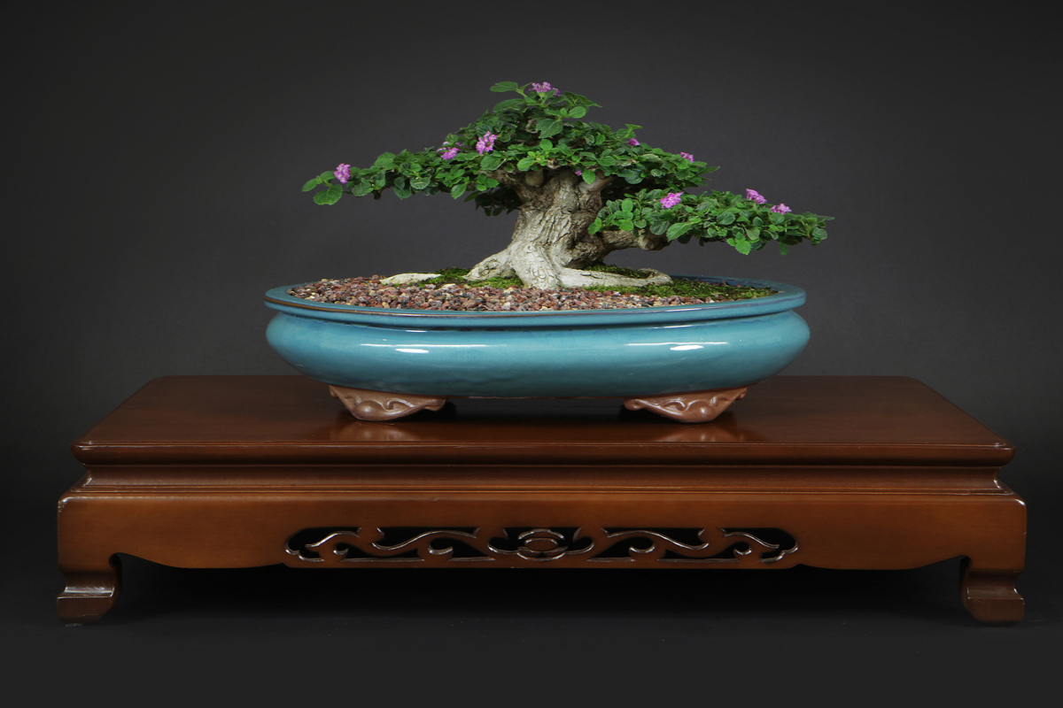Bonsai, A Living Art Form Display